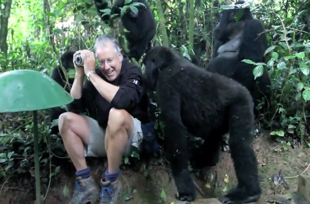 Touched by a mountain gorilla