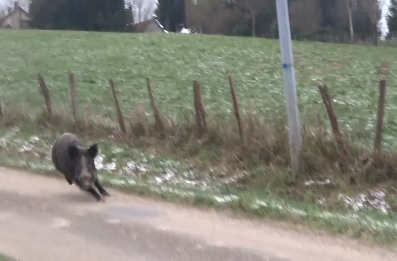 Adorable ponies instantly become attack dogs to chase off a